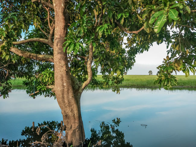 EyeEm Indonesia EyeEm Best Shots Tree Nature Outdoors Tree Trunk Tranquility Water Reflection Lake Beauty In Nature Scenics Day No People Rural Scene Leaf Sky Tree Area Blue Landscape Forest Growth Tranquil Scene Branch Green Color