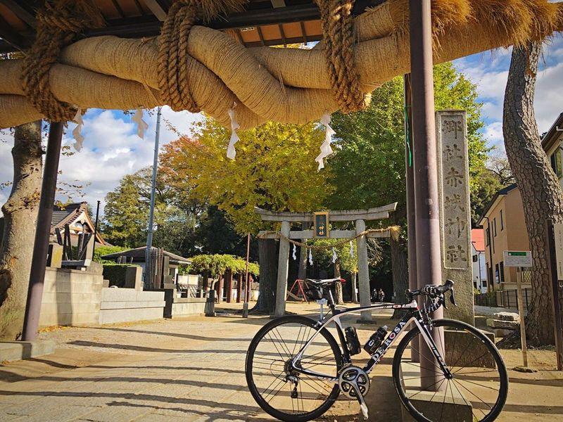 赤城神社 流山 Chiba,Japan Transportation Bicycle Autmn Colors Autumn Leaves Autumn 3XSPUnity Roadbike DeRosa Japan Photography Japan Photos Relaxation 紅葉 Enjoying Life Sky Tree Relaxing