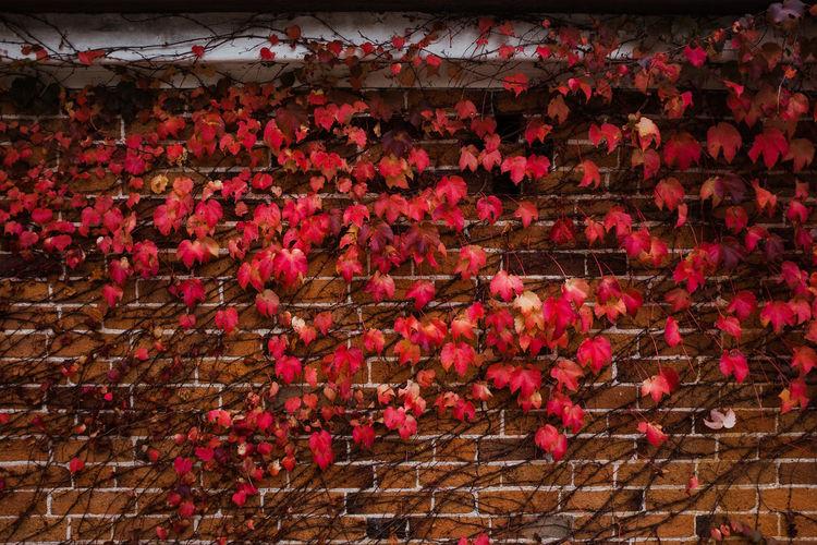 Leaves against
