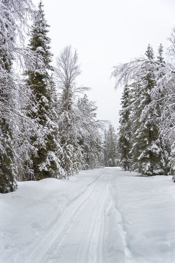 Empty road though forest covered in snow Beauty In Nature Clear Sky Cold Temperature Day Landscape Nature No People Outdoors Scenics Sky Snow The Way Forward Tire Track Tranquil Scene Tranquility Tree Weather White Color Winter