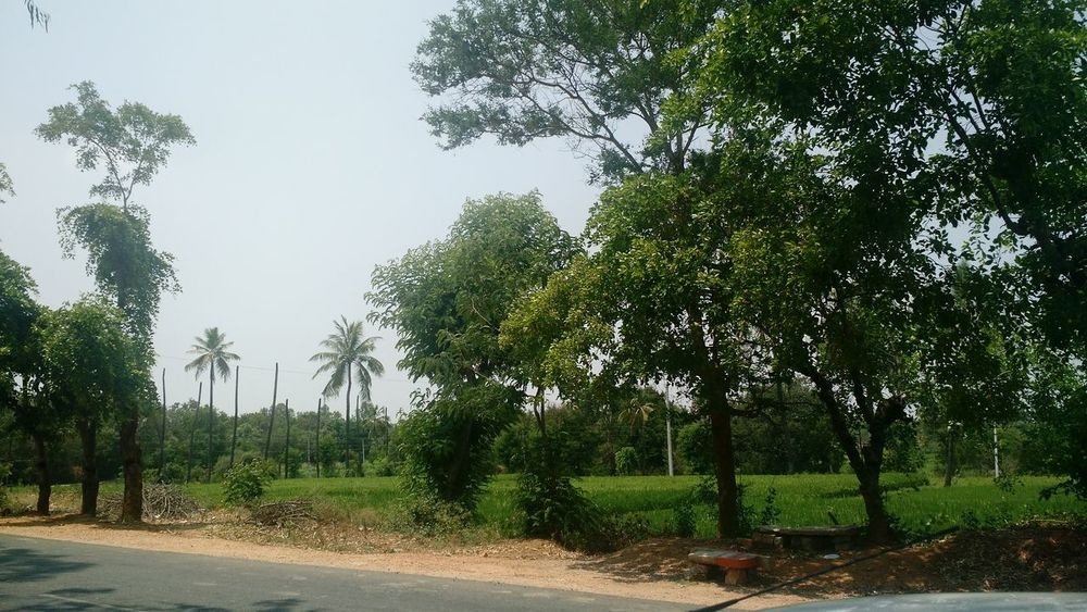 Things I LikeA Greenspot in draught area on Sunny days besides a highway between Vayalpadu and Madanapalle area in Chittoor district AP state in India.