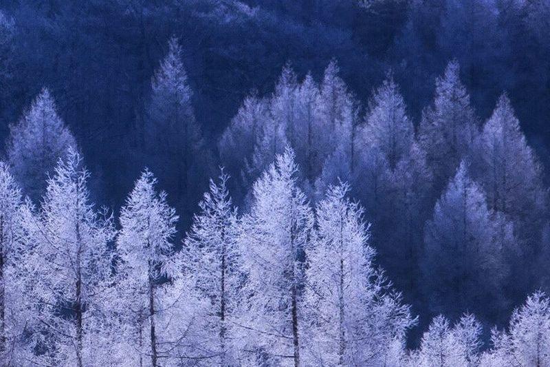 Winter Nature Hoarfrost Rimetree Forest Nature Beauty In Nature EyeEm Best Shots - Nature EyeEm Nature Lover Scene Photography Light And Shadows Dedicate To @intreccio ISOPIX