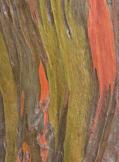 Close-up of multi colored tree trunk