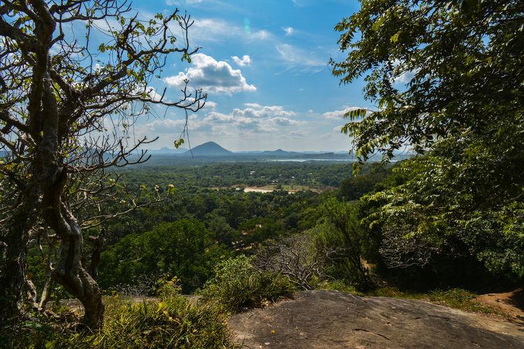 Sri Lanka landscape Sky Tree Mountain Sky Landscape