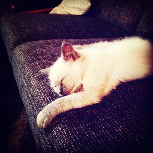 Theodor is sleeping Cat, Cute First Eyeem Photo