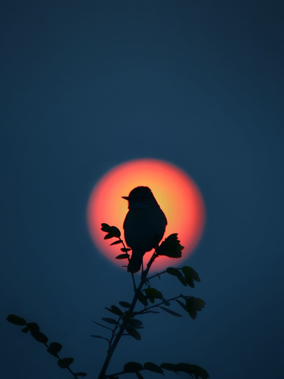 sky, plant, silhouette, nature, beauty in nature, vertebrate, orange color, animal themes, animal, animal wildlife, no people, sunset, animals in the wild, flower, bird, night, flowering plant, copy space, low angle view, outdoors, astronomy