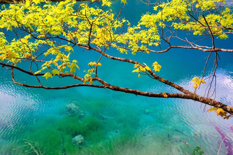 Tree by sea against blue sky