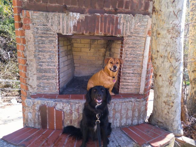 Pets Dog Built Structure Nature Architecture Outdoors Lgv20 California Losangeles Malibu Friends Corgimix Corgi Happy Buddies Pals Lgv20photography Hiking Animal Themes Mammal One Animal Domestic Animals No People Day Building Exterior