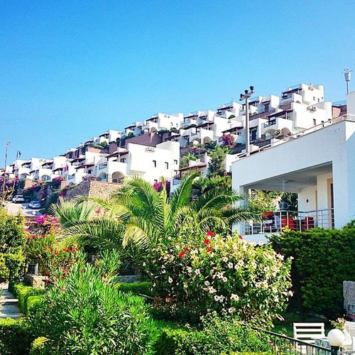 Bodrum Houses White Green blue summer beauty hot good