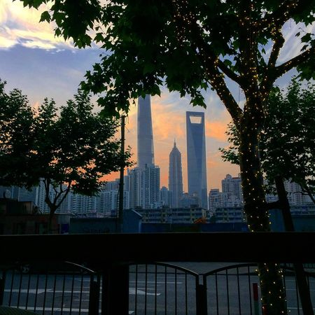 The light's Sunset Pudong Shanghai Thelights Architecture Built Structure Skyscraper Tall - High Building Exterior Tree Sky