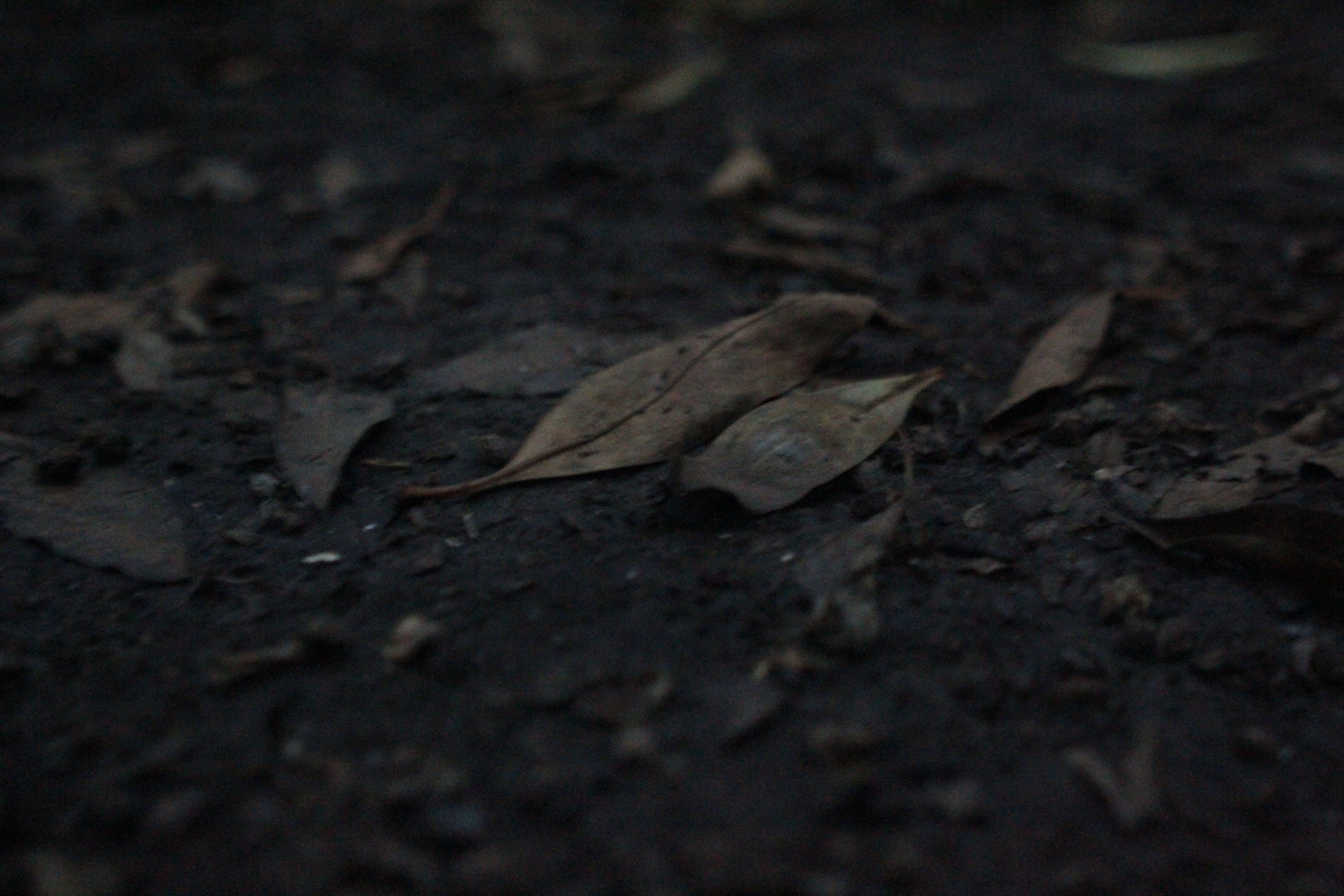 leaf, close-up, no people, animal themes, animals in the wild, outdoors, nature, night, fragility
