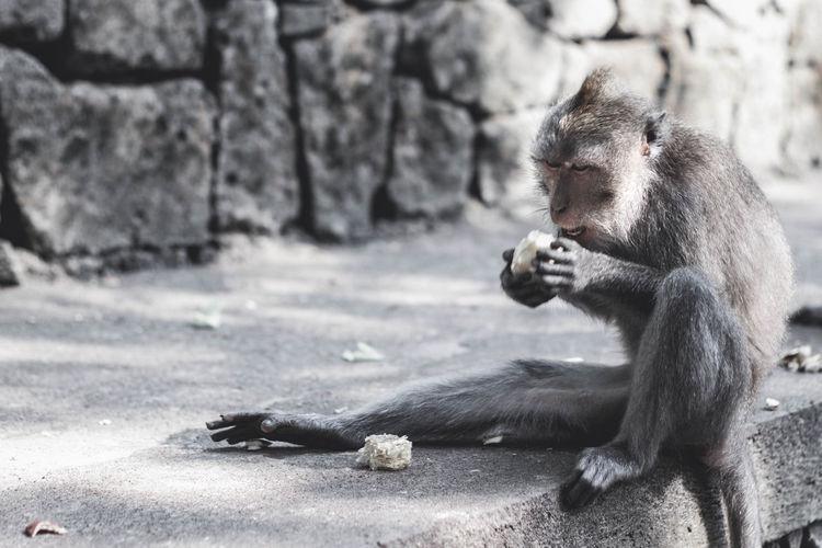 Monkey sitting in a zoo