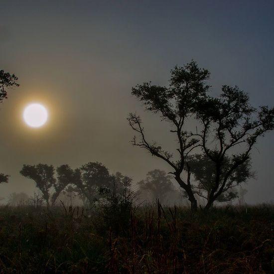 Myakka Florida Marsh Sarasota sunholiday