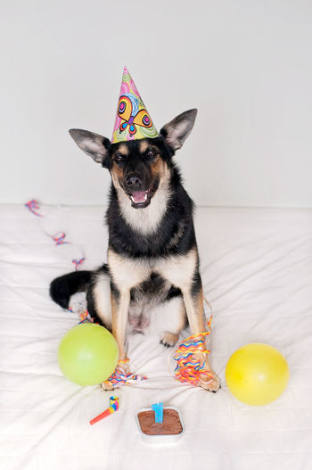 Dog wearing party hat with confetti and balloons against white background
