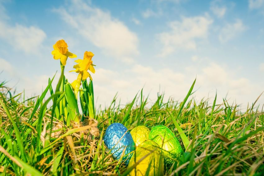 Daffodils and Easter eggs on a meadow Spring Flowers Daffodils Easter Eggs Grass Easter Cloud - Sky Yellow Field Flower Sky Outdoors No People Day Fragility Nature Close-up Beauty In Nature