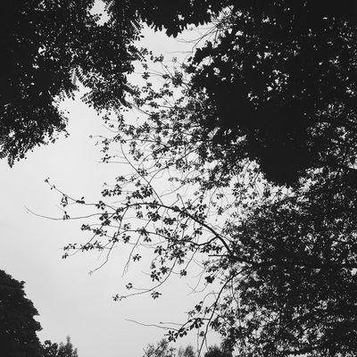 Blackandwhite Vscocam Trees