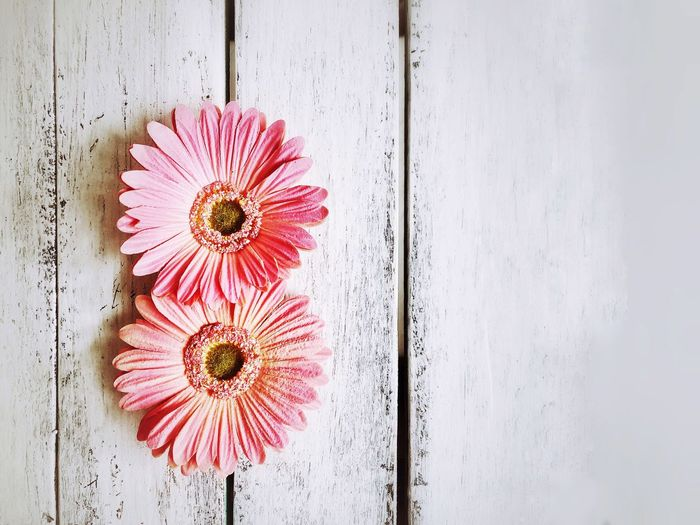 Copy Space Womens Day Women Day Daisy Eight EyeEm Selects Flower Flowering Plant Freshness Flower Head Fragility Close-up Plant No People Petal Pink Color Wood - Material Day Directly Above