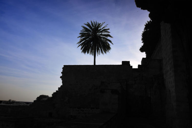 Lonely palm in ancient madinat alzahra Andalucía Andalusia Ancient Civilization Architecture Building Building Exterior Built Structure Cloud - Sky Day History Low Angle View Nature No People Outdoors Palm Tree Plant Qurdobah Silhouette Sky The Past Travel Destinations Tree Tropical Climate Wall