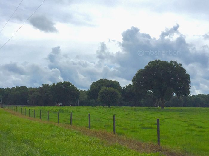 Pasture Farm Countryside Florida Wideopenspaces Backroads Clouds And Sky Explore Landscape Field