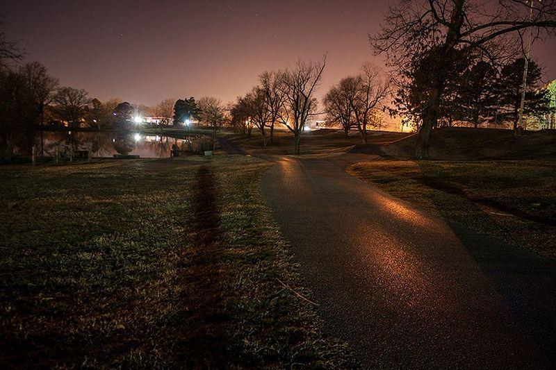 Bare trees at night