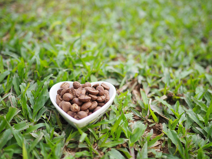 Heart shaped cup filled with coffee beans on garden background