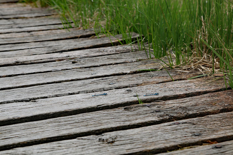 Boardwalk with two small dragonflies Boardwalk Wood - Material Plant Grass No People Wood Day Nature Textured  Outdoors Footpath Pattern Plank High Angle View Growth Selective Focus Tree Land Green Color Close-up Wood Paneling Small Dragonfly Dragonfly