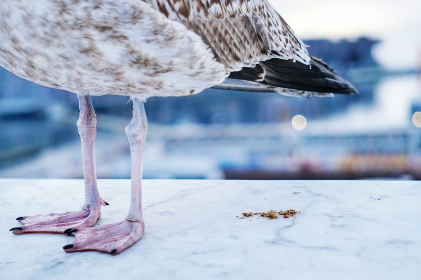 A seagull taking a break on the rooftop of Oslo Opera House. #sony #SonyA6300 #sonyalphaphotography #Winter #seagull #gull #oslooperahouse #birdsfeet Animal Wildlife No People Outdoors Sea Animal Themes One Animal Water Bird Day Animals In The Wild Nature Close-up