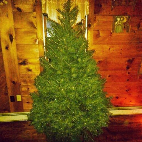 Christmas tree before we decorated it. ConcolorFir December2014