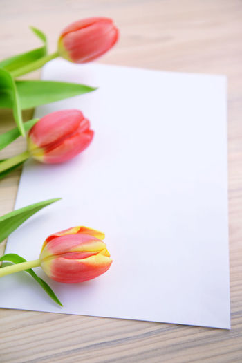 Close-up of tulips with greeting card on table