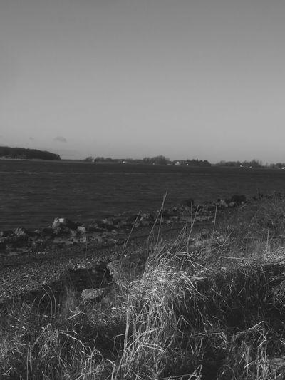 Blackandwhite Water Sea Rural Scene Agriculture Sky Grass