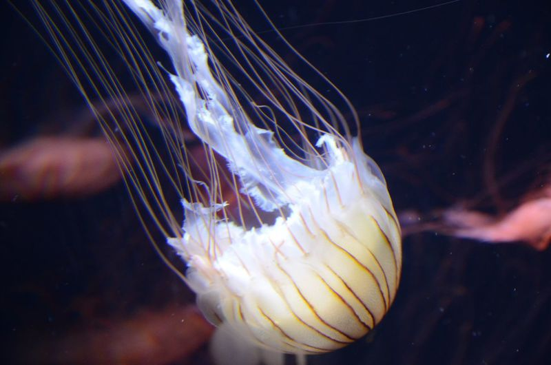 Lucky shot Jellyfish Jellyfish Gallery Water Underwater Underwater Photography Check This Out