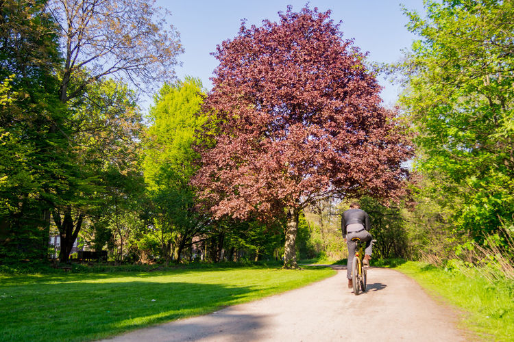 Beauty In Nature Bicycle Cycling Day Green Growth Men Nature One Man Only One Person Outdoors Park Park - Man Made Space People Real People Red Beech Red Tree Road Rotbuche Sky Sun Sunlight Sunny Day The Street Photographer - 2017 EyeEm Awards Tree