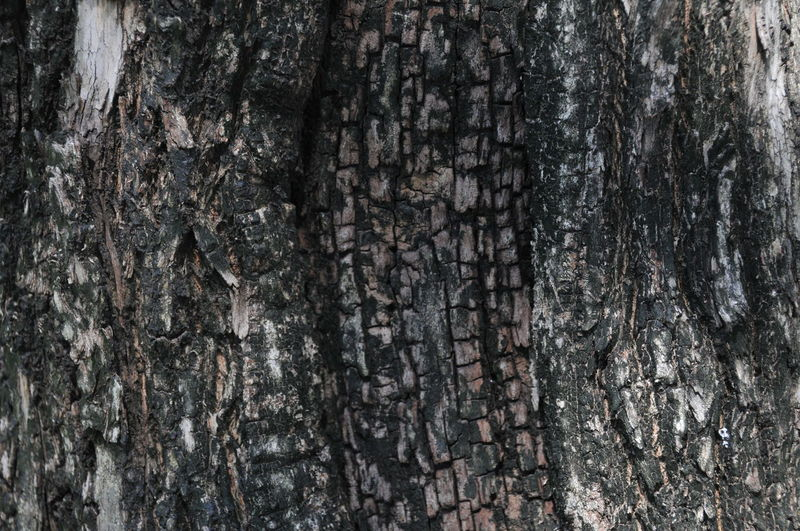 Backgrounds Close-up Day Full Frame Nature No People Outdoors Rough Textured  Tree Tree Trunk Wood - Material