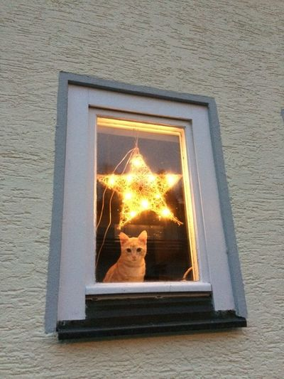 Portrait of a cat on the window