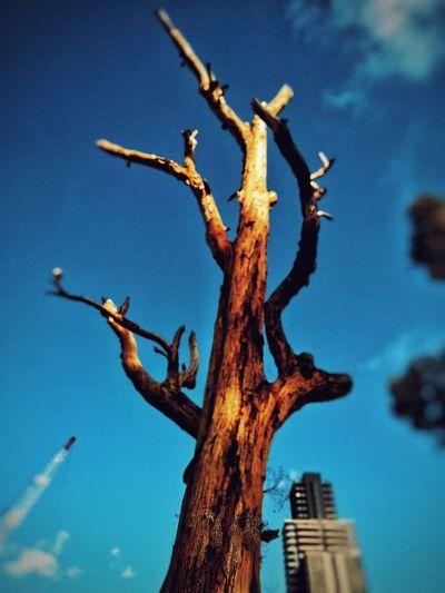 tree and sky Tree Branch Blue Bare Tree Dead Plant Sky Close-up Dead Tree Bark