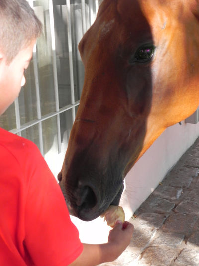 Amistad Animal Head  Animal Themes Caballos Close-up Day Domestic Animals Friends Horse Human Hand Indoors  Lealtad Love Loyalty Mammal Nature One Animal Real People Two People Young Adult