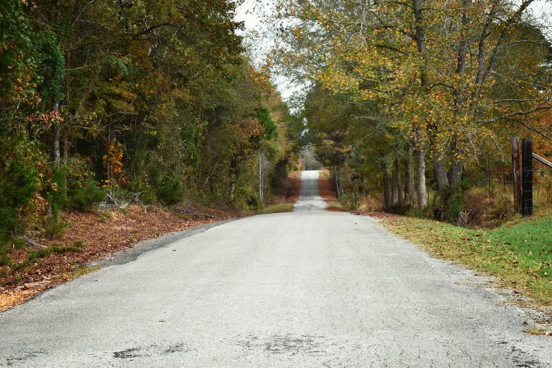 Backroads Fall Colors Fall Colors Trees Autumn Narrowing Asphalt Ditches
