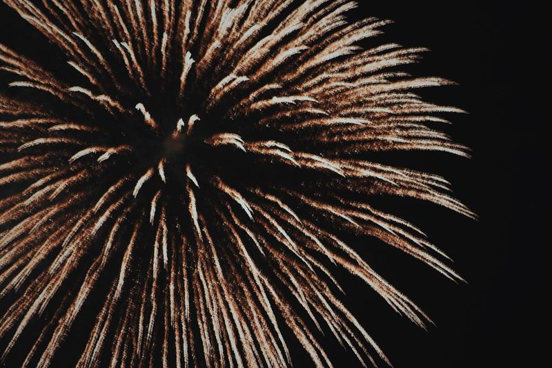 2018 American Festival Firework Night Firework Display Exploding Celebration No People Low Angle View Event Sky Nature Motion Arts Culture And Entertainment Illuminated Long Exposure Beauty In Nature Outdoors Glowing Plant Blurred Motion Light