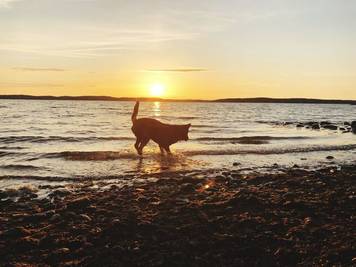 Sunset One Animal Water Sky Domestic Animals Land Pets