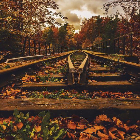 Autumn Colors Eye4photography  First Eyeem Photo IPSGolden