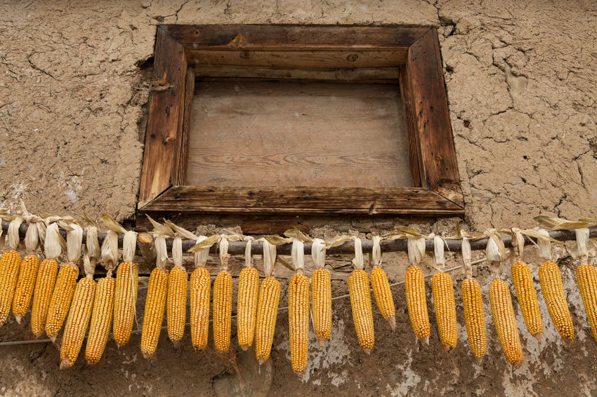 ears of corn hanging to dry Building Building Exterior Corn Day Drying Ears Of Corn Food Hanging Husks Kernels No People Outdoors Sünnetköy Turkey Village Window