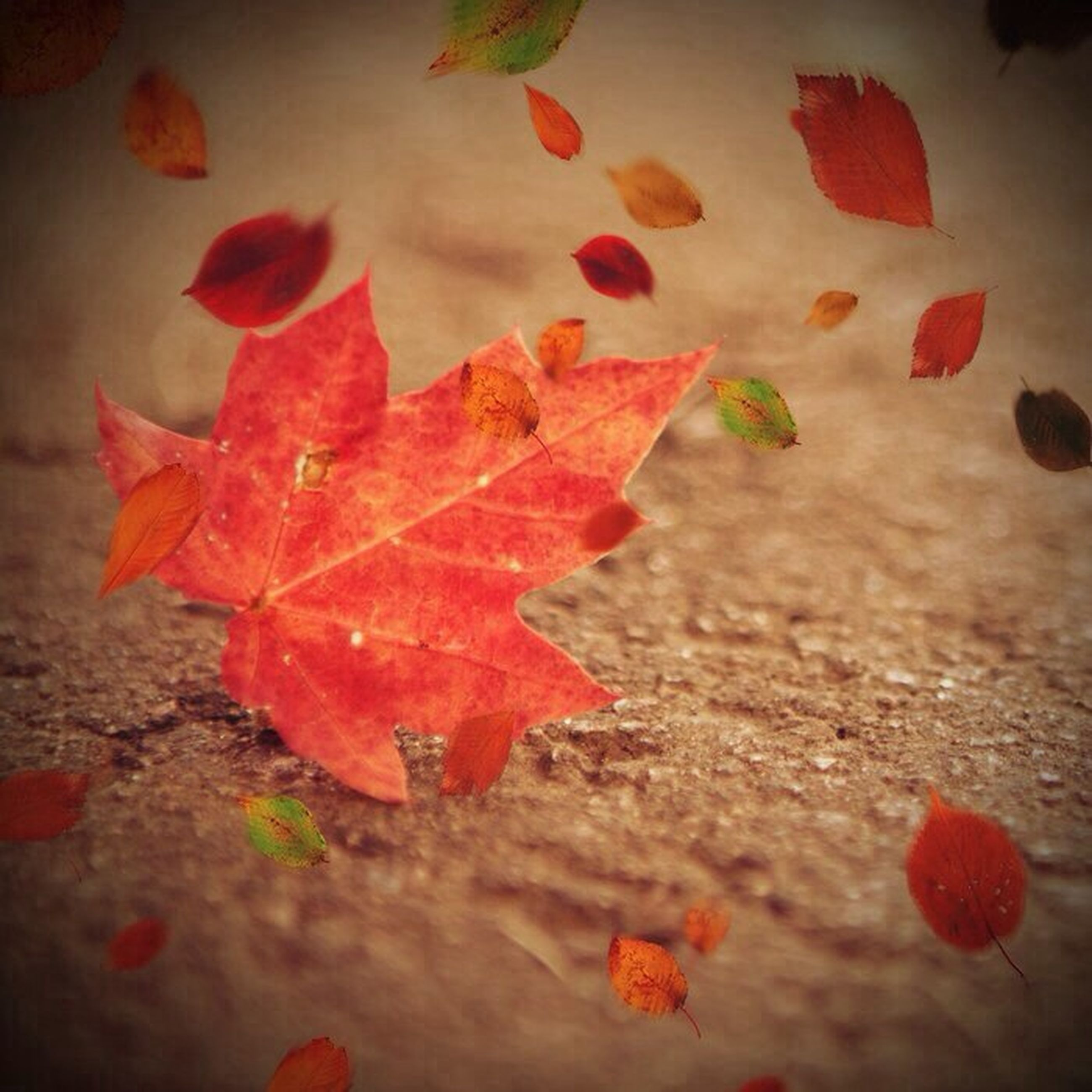 leaf, autumn, change, red, leaves, season, maple leaf, fallen, orange color, dry, nature, close-up, leaf vein, high angle view, water, beauty in nature, no people, wet, outdoors, day
