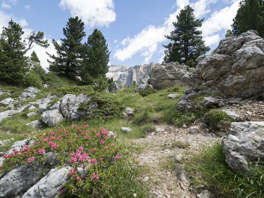 Flower Landscape Plant Nature Summer Sky Tree Uncultivated Beauty In Nature No People Outdoors Cloud - Sky Scenics Wildflower Mountain Day Sella_gruppe Sellaronda Mountain Peak Dolomites, Italy