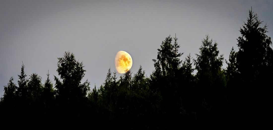Finland Finnland In Summer Moon Astronomy Beauty In Nature Forest Land Moon Nature No People Non-urban Scene Outdoors Silhouette Sky Tree