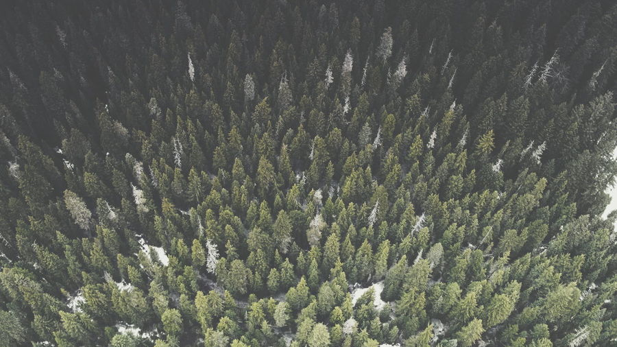 Forest Trees Aerial Aerial View DJI X Eyeem Green Pacific Northwest  Nature Low Angle View Beauty In Nature Tree No People Growth Forest Full Frame Scenics Outdoors Freshness