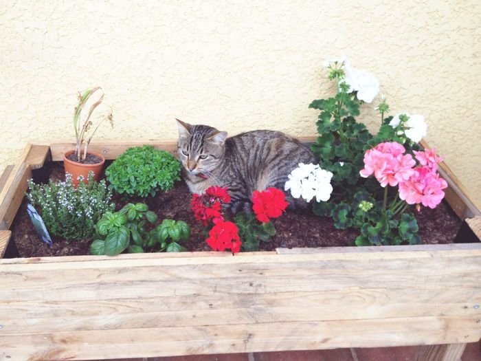 Flower Domestic Cat Plant Domestic Animals Pets Leaf No People One Animal Nature Feline Freshness Animal Themes Flower Head Mammal Day Beauty In Nature Tabby Cat Outdoors Cat♡ Likeforlike #likemyphoto #qlikemyphotos #like4like #likemypic #likeback #ilikeback #10likes #50likes #100likes #20likes #likere