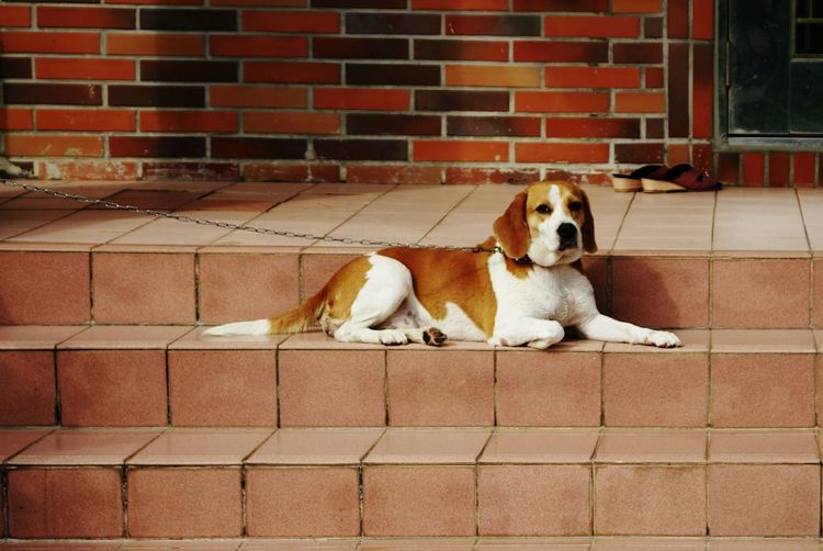 Dog Stare Getting Inspired What Does Freedom Mean To You? Chained Animal Help Me Fighting For Freedom Pet SecurityGuard