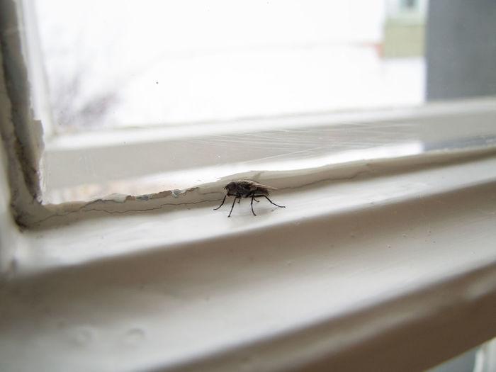 Close-up of spider on window