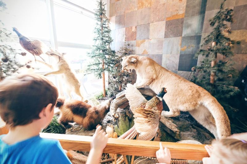 Photo essay - A day in the life. Cabela's Outfitters Kearney, Nebraska November 6, 2016 A Day In The Life Americans Animal Themes Business Finance And Industry Cabela's Camera Work Cougar Economy EyeEm Gallery Hunting Middle America Mountain Lion Nebraska Outfitter Photo Diary Photo Essay Retail Store Shopping Sporting Goods Sporting Goods Shop Storytelling Taxidermy Travel Photography Visual Journal Weekend