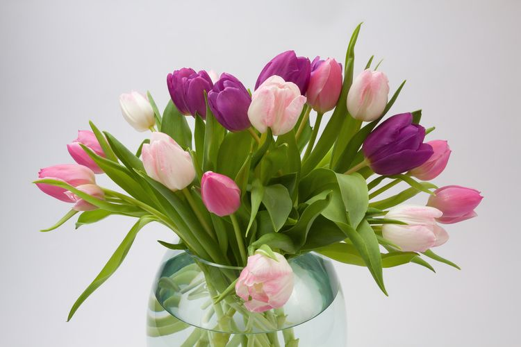 Beauty In Nature Bouquet Bunch Of Flowers Close-up Flower Flower Arrangement Flower Head Flowering Plant Fragility Freshness Indoors  Inflorescence Leaf Nature No People Petal Pink Color Plant Plant Part Purple Studio Shot Tulip Vase Vulnerability  White Background